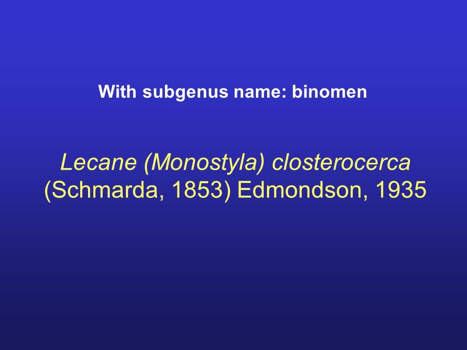 Lecane (Monostyla) closterocerca (Schmarda, 1853) Edmondson, 1935