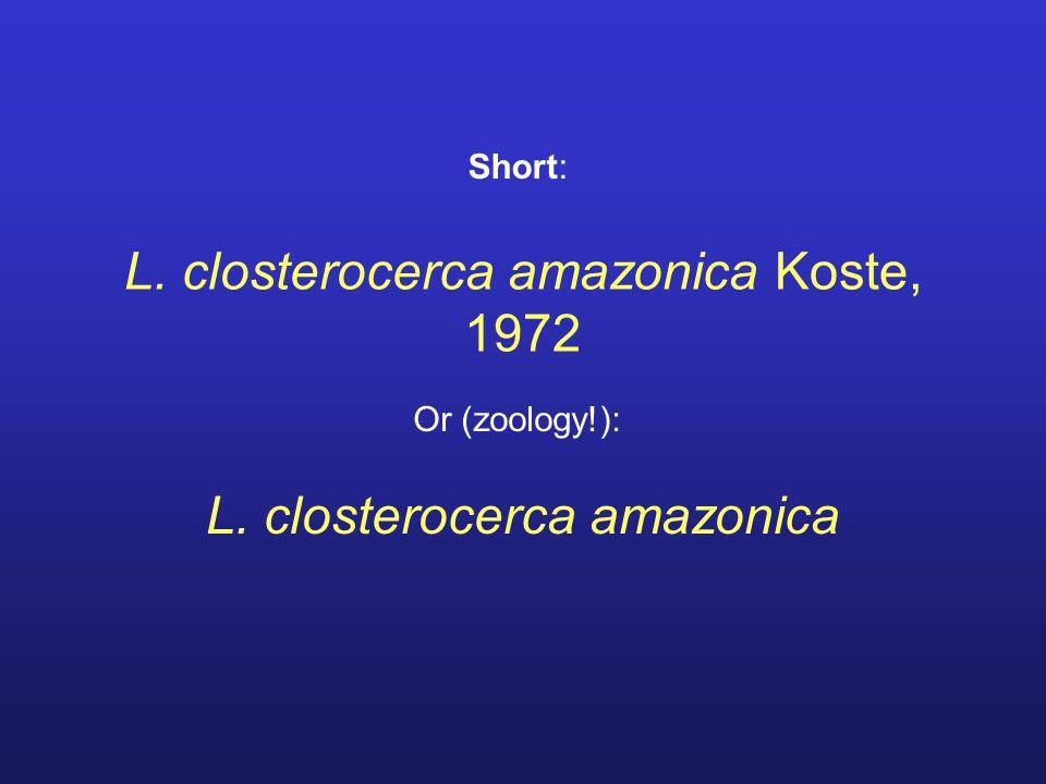 L. closterocerca amazonica Koste, 1972