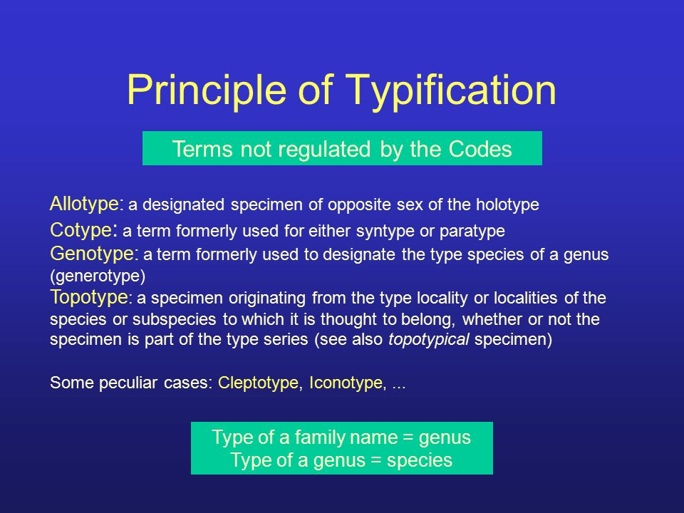 Principle of Typification