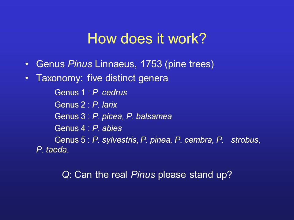 Q: Can the real Pinus please stand up