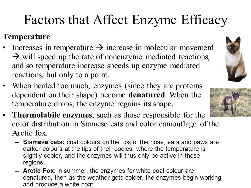 Factors that Affect Enzyme Efficacy