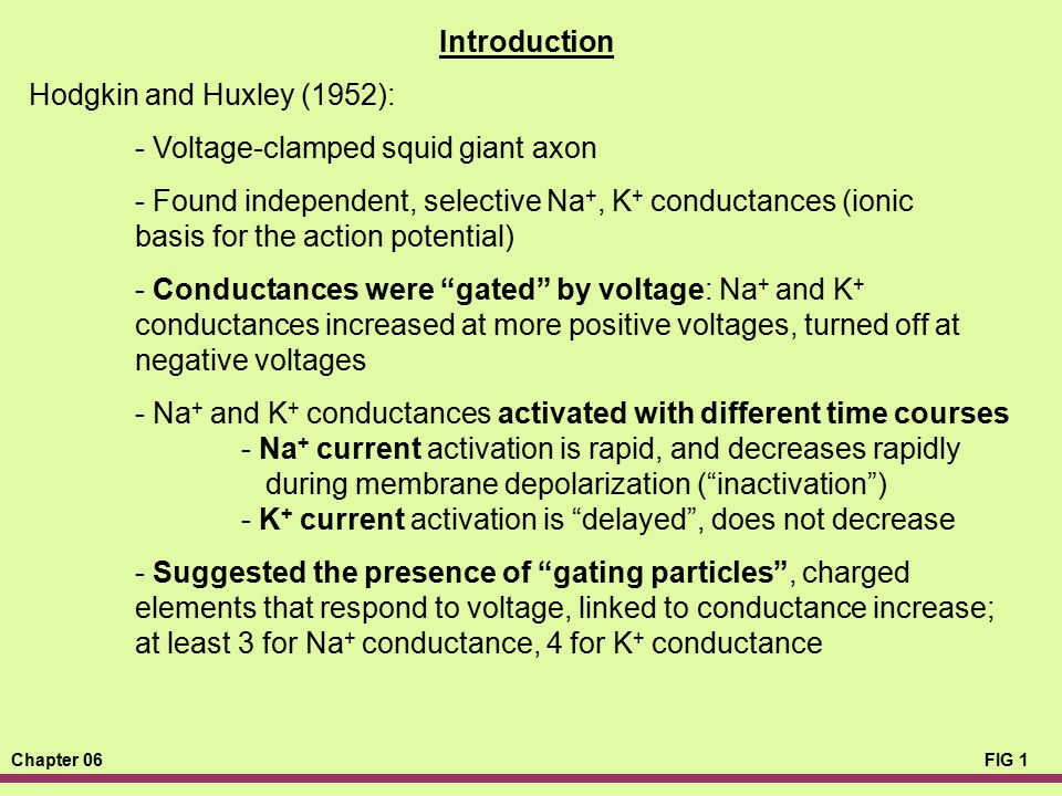 Introduction Hodgkin and Huxley (1952): - Voltage-clamped squid giant axon.