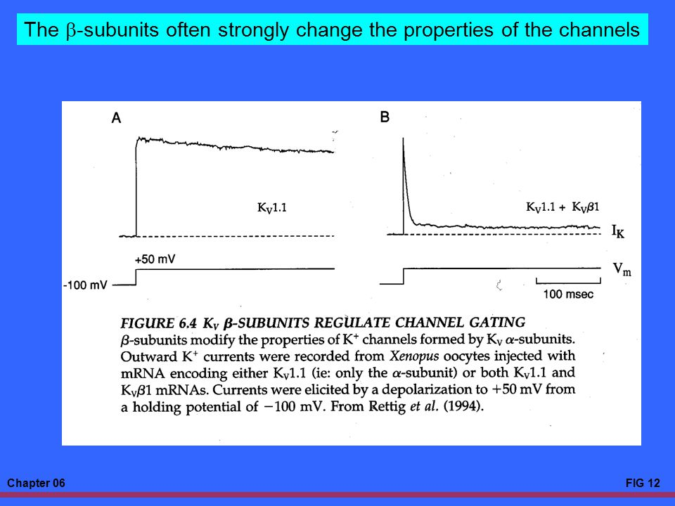 The b-subunits often strongly change the properties of the channels