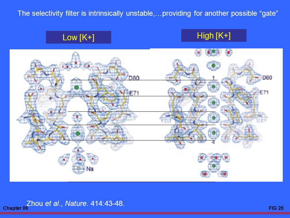 The selectivity filter is intrinsically unstable,…providing for another possible gate