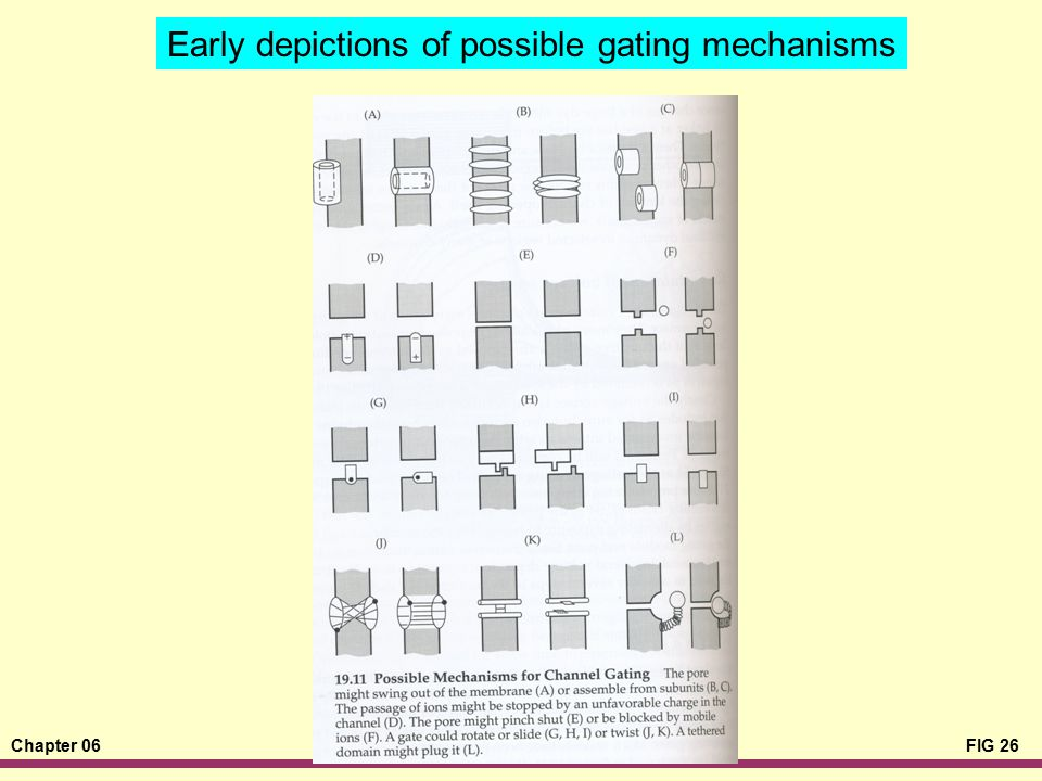 Early depictions of possible gating mechanisms