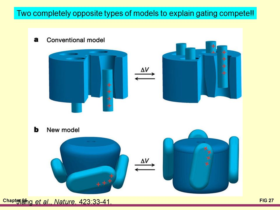 Two completely opposite types of models to explain gating compete!!