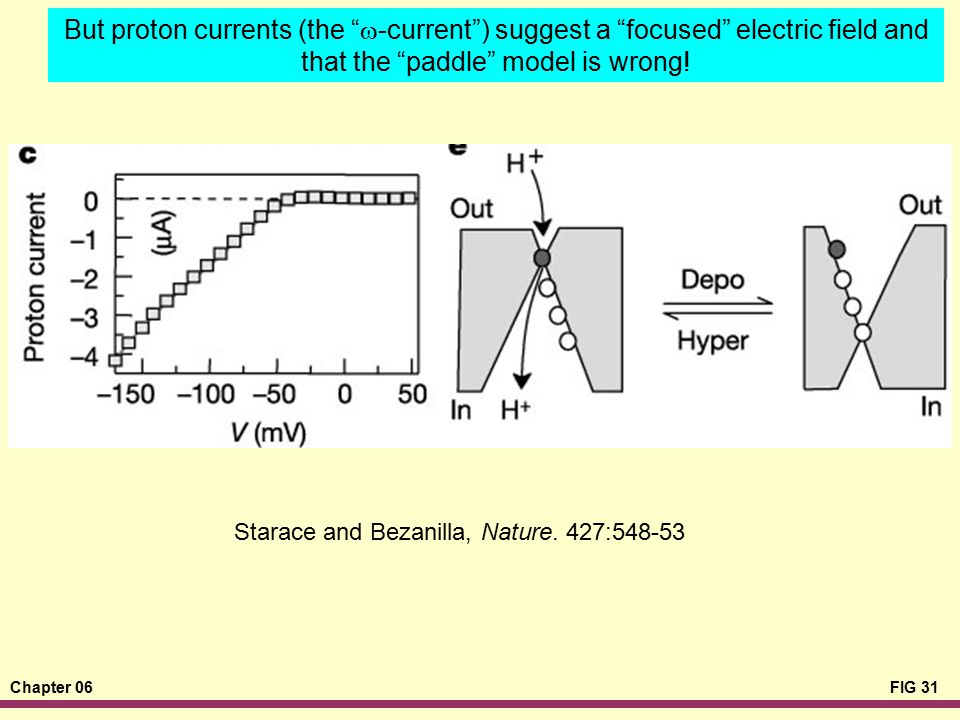 But proton currents (the w-current ) suggest a focused electric field and that the paddle model is wrong!