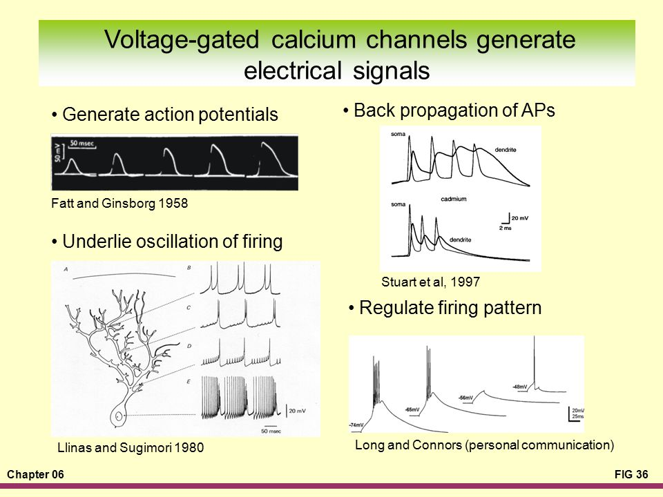 Voltage-gated calcium channels generate electrical signals