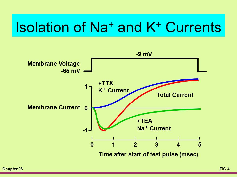 Isolation of Na+ and K+ Currents