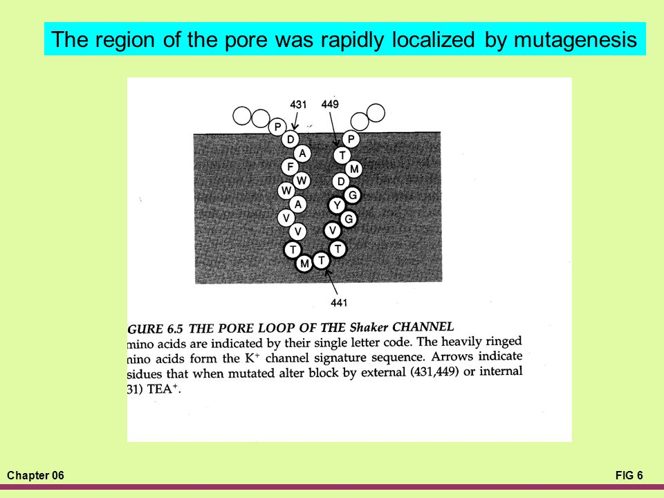 The region of the pore was rapidly localized by mutagenesis