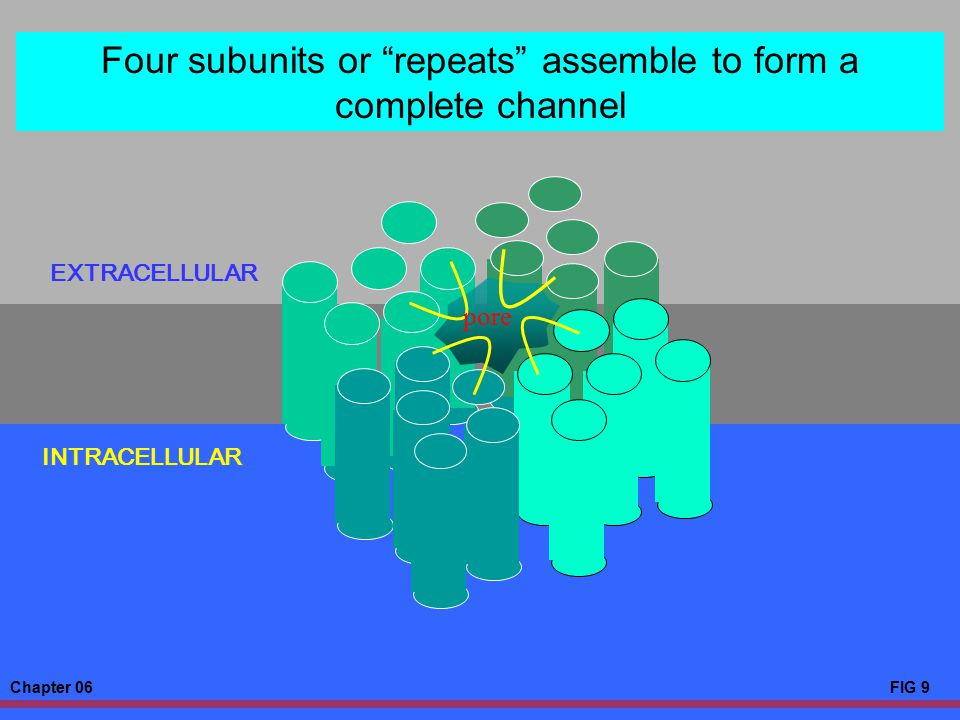 Four subunits or repeats assemble to form a complete channel