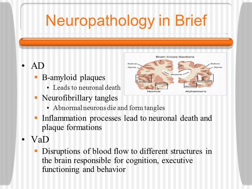 Neuropathology in Brief