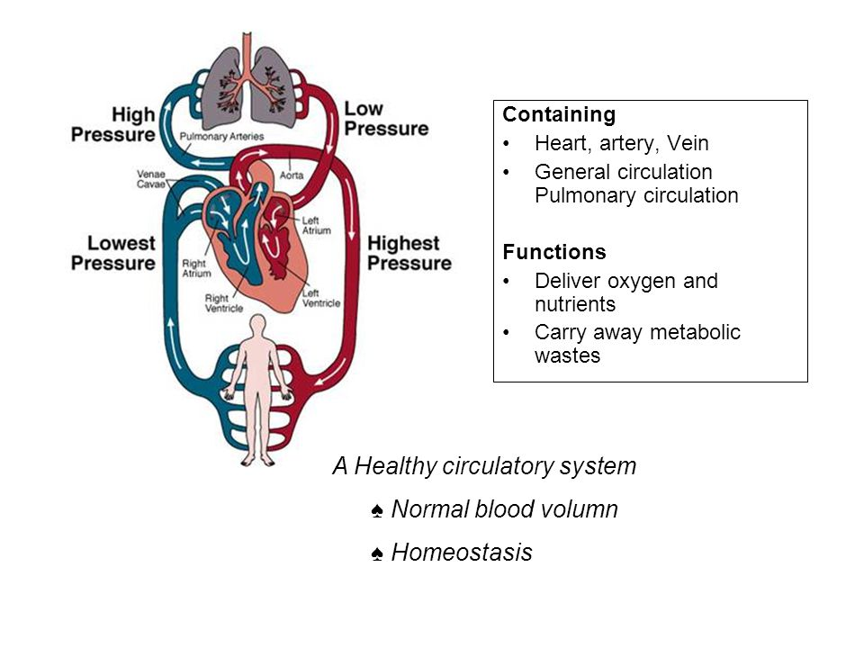A Healthy circulatory system ♠ Normal blood volumn ♠ Homeostasis