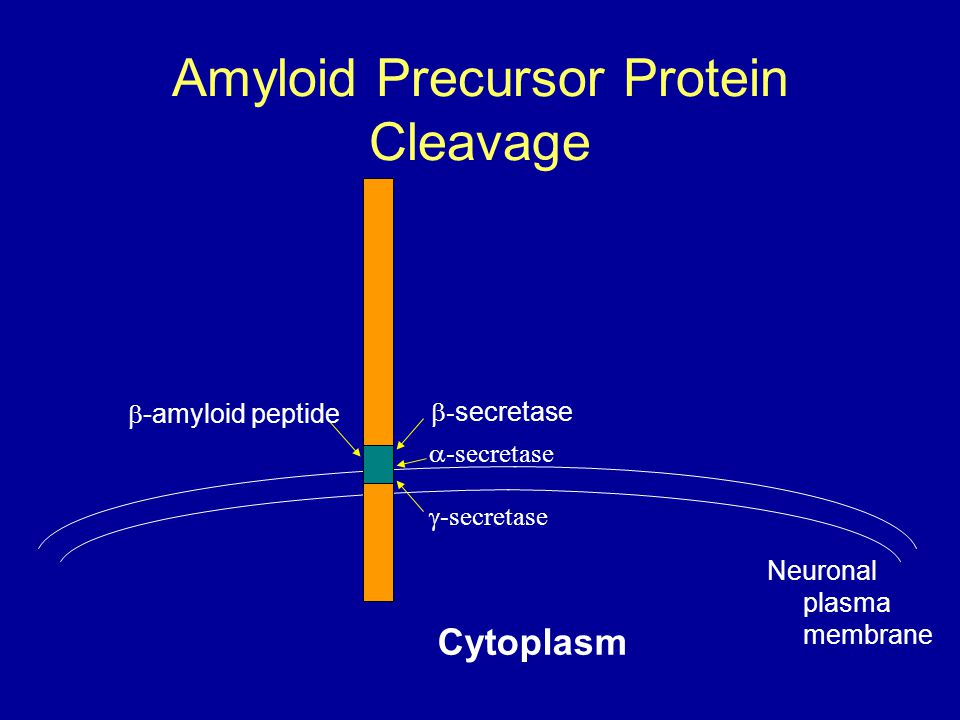 Amyloid Precursor Protein Cleavage
