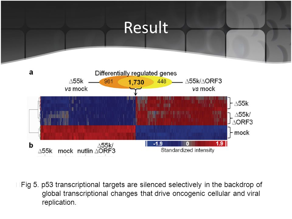 Result ▶Fig 5. p53 transcriptional targets are silenced selectively in the backdrop of.
