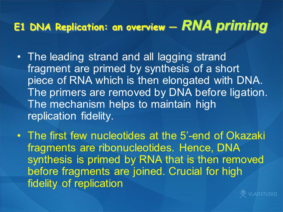 E1 DNA Replication: an overview — RNA priming