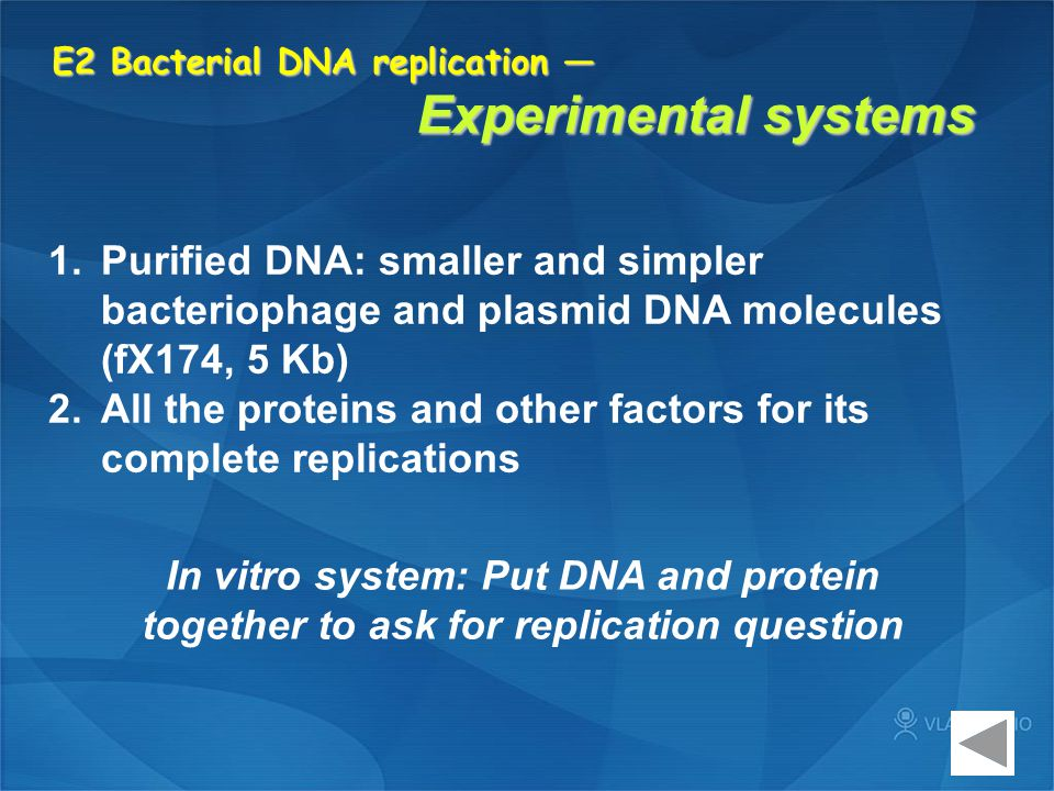 E2 Bacterial DNA replication — Experimental systems