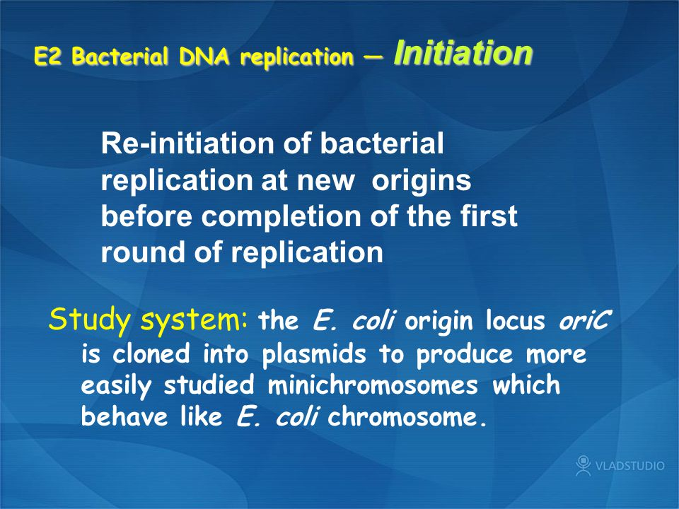 E2 Bacterial DNA replication — Initiation
