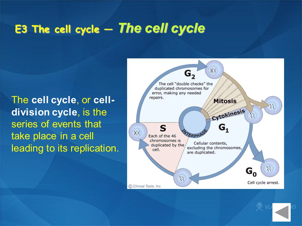E3 The cell cycle — The cell cycle