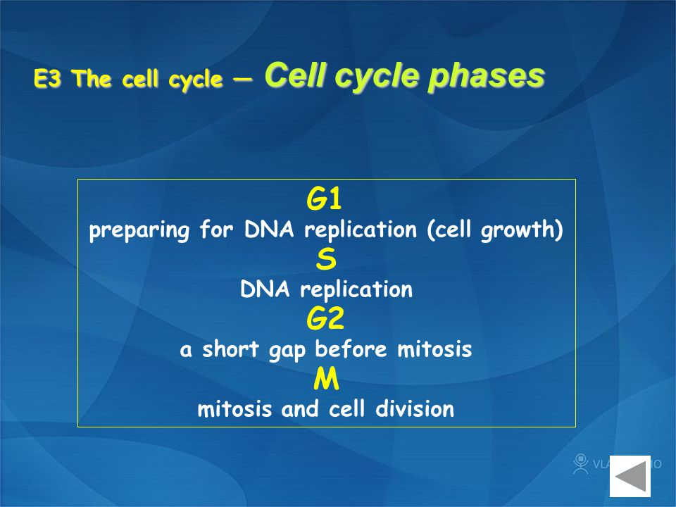 E3 The cell cycle — Cell cycle phases