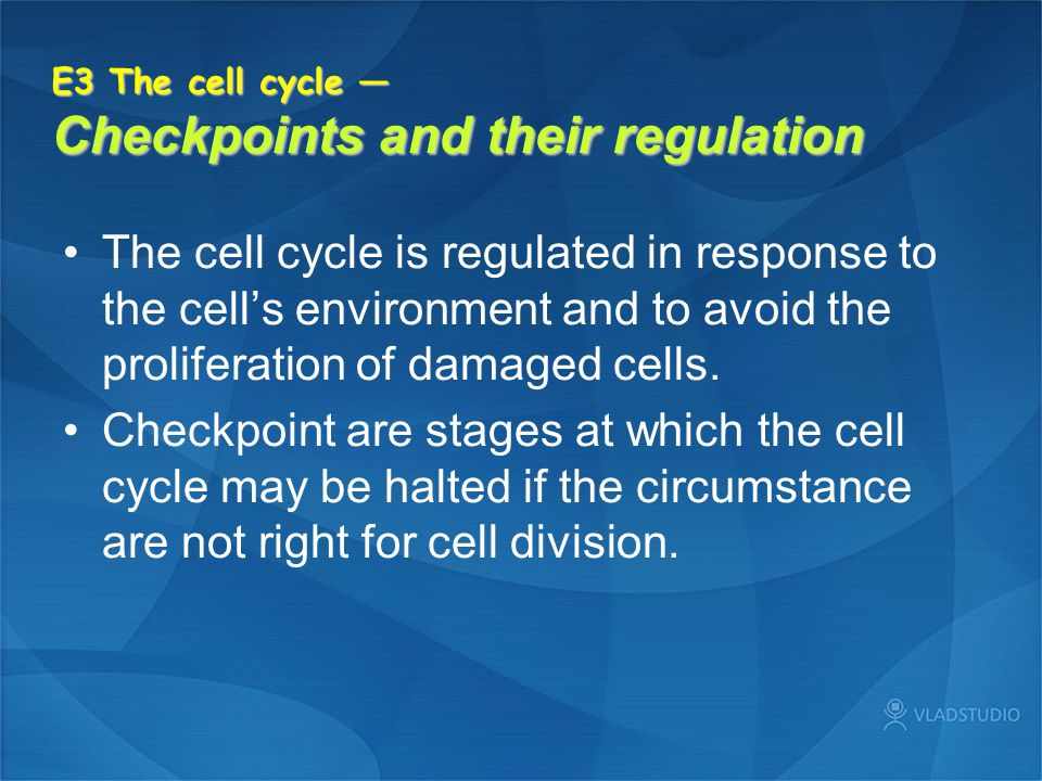 E3 The cell cycle — Checkpoints and their regulation