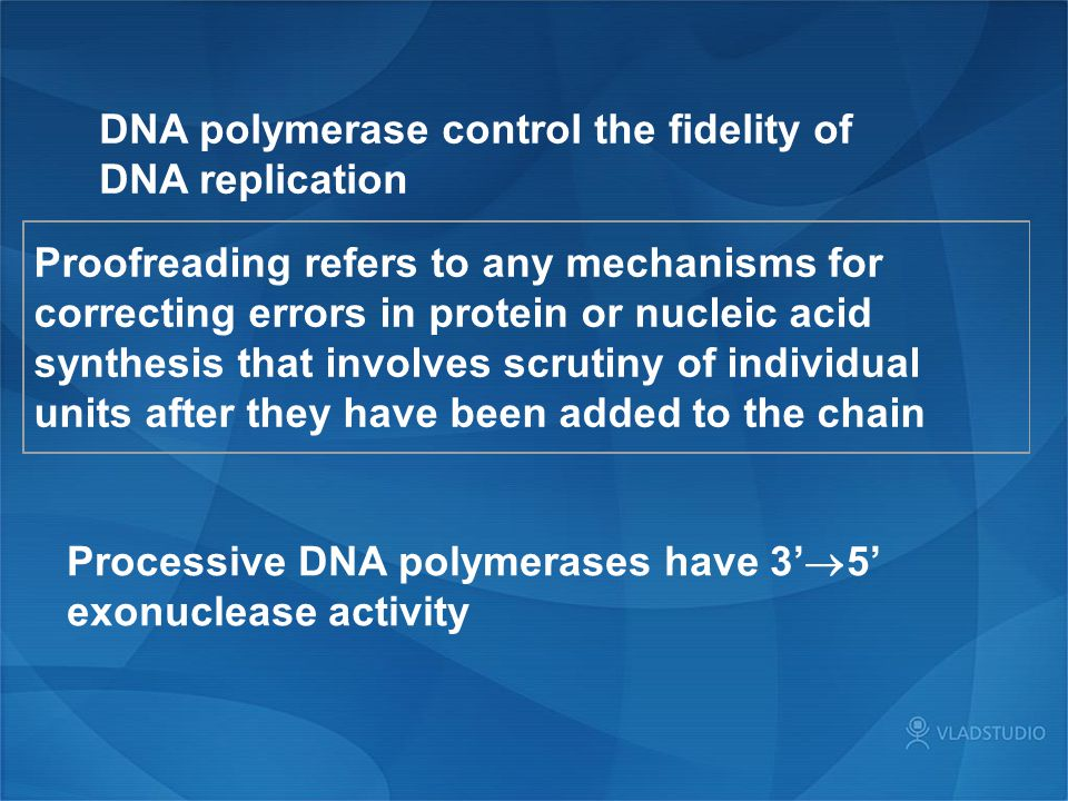 DNA polymerase control the fidelity of DNA replication