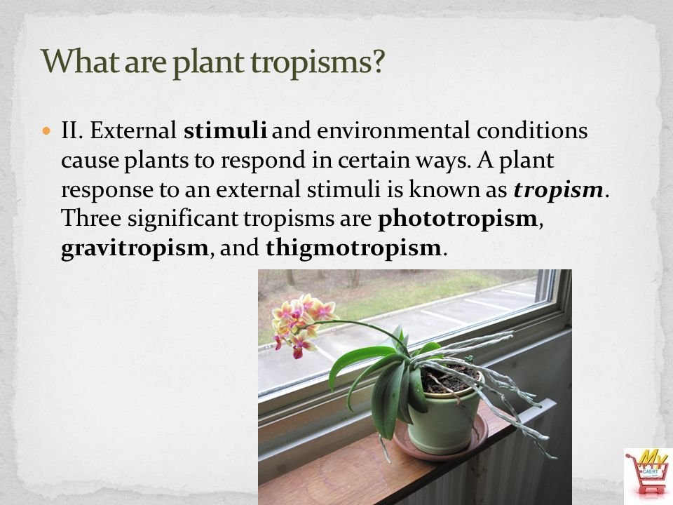 What are plant tropisms