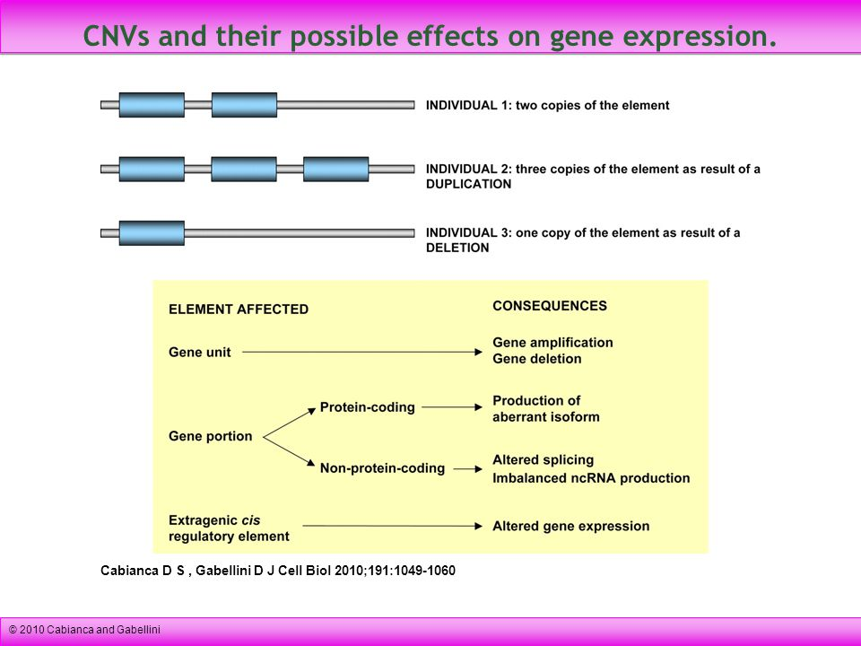 CNVs and their possible effects on gene expression.