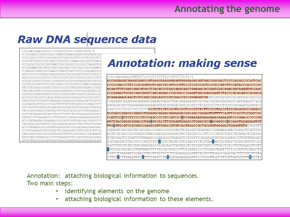 Annotating the genome Annotation: attaching biological information to sequences. Two main steps: identifying elements on the genome.