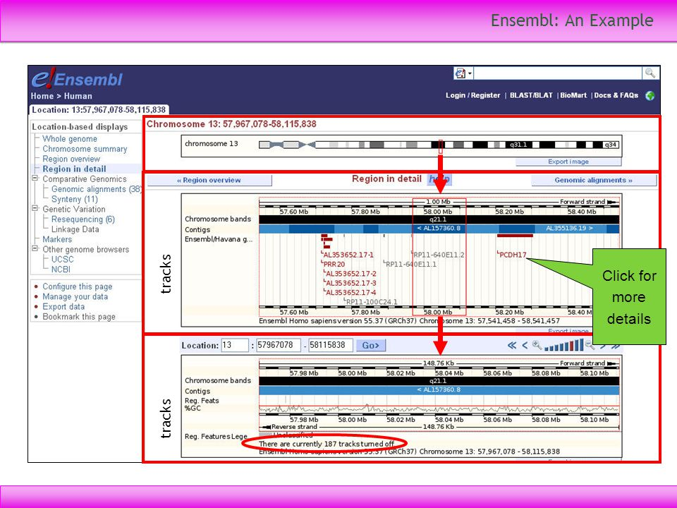 Ensembl: An Example Click for more details tracks tracks