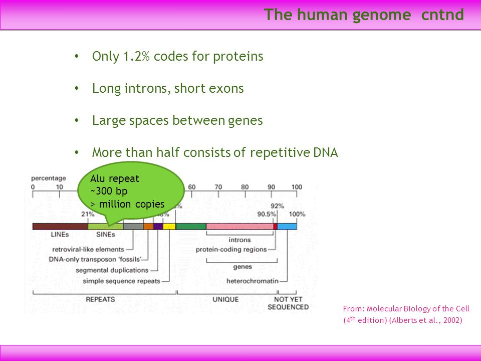 The human genome cntnd Only 1.2% codes for proteins