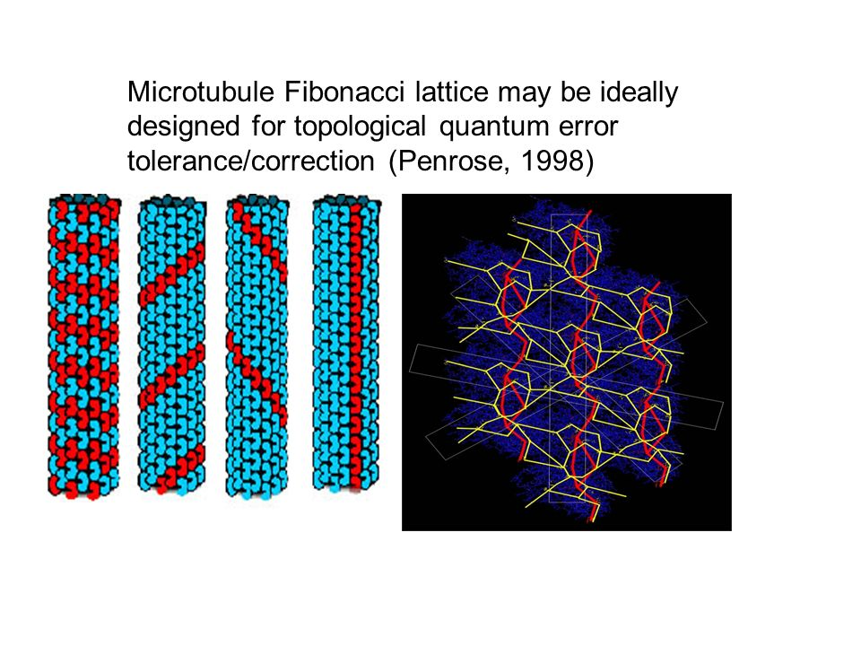 Microtubule Fibonacci lattice may be ideally