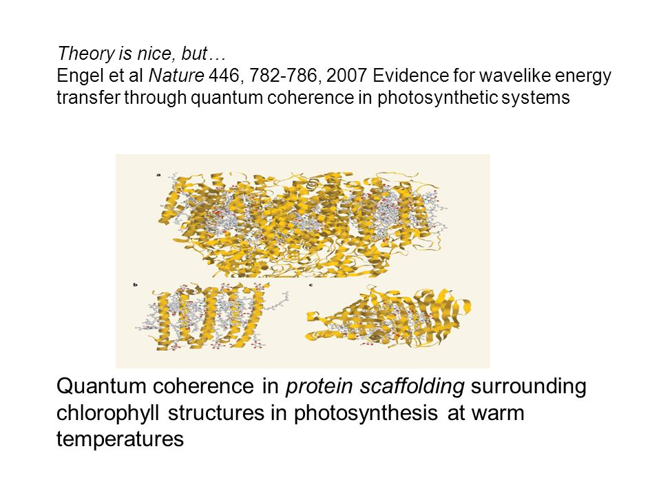Quantum coherence in protein scaffolding surrounding