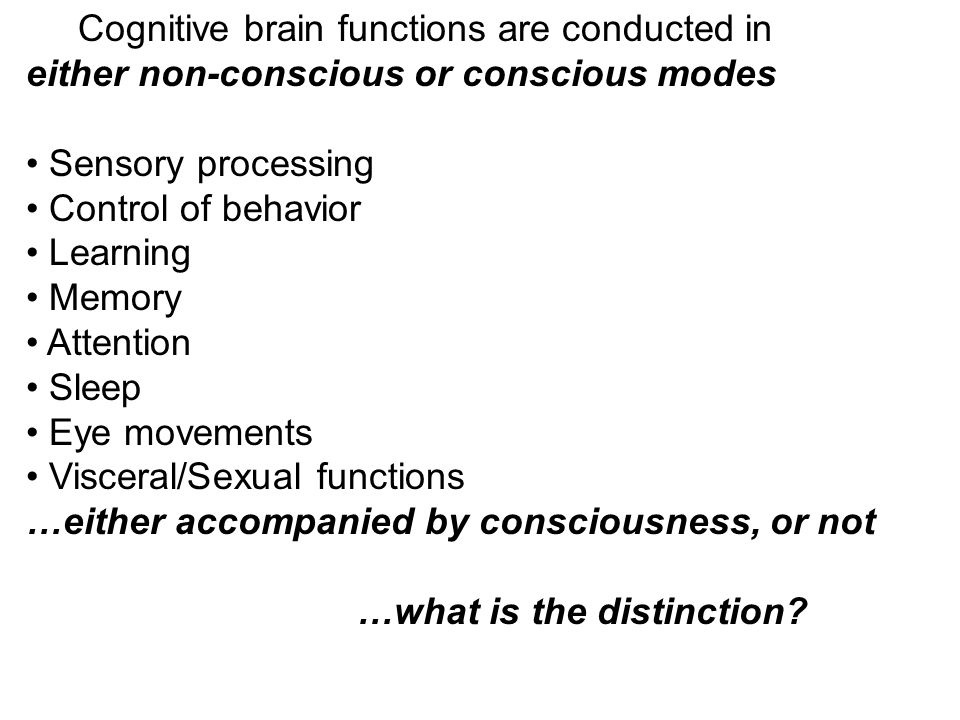 Cognitive brain functions are conducted in