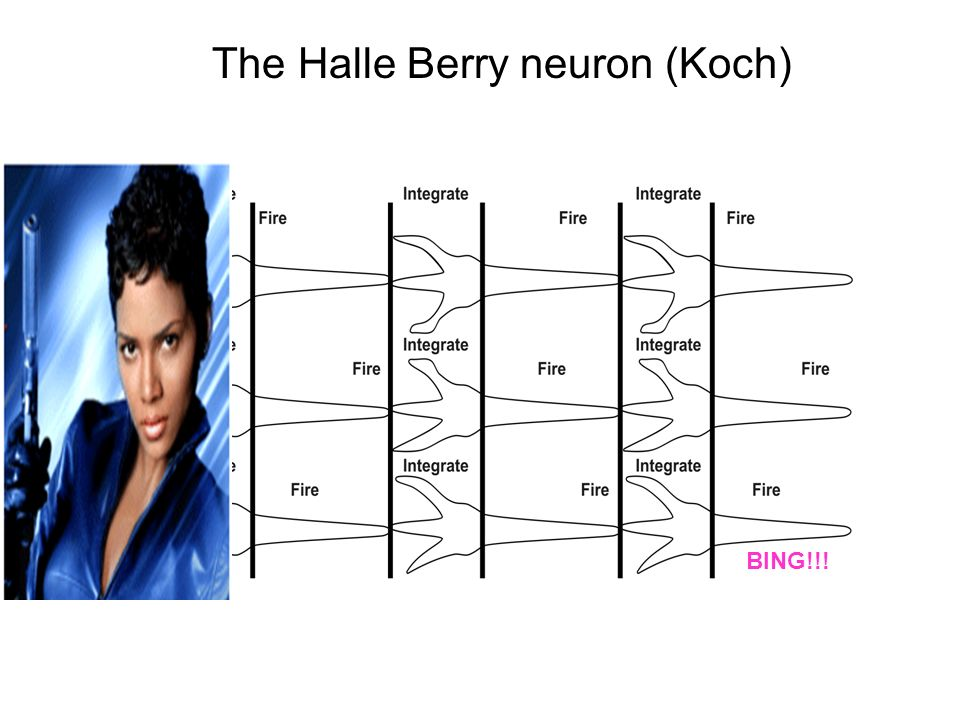 The Halle Berry neuron (Koch)