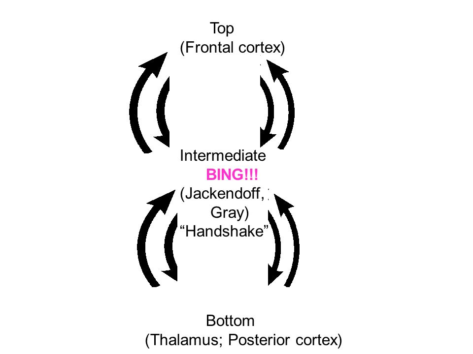 Top (Frontal cortex) Intermediate. BING!!. (Jackendoff, Gray) Handshake Bottom.