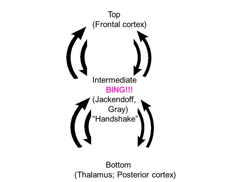 Top (Frontal cortex) Intermediate. BING!!. (Jackendoff, Gray) Handshake Bottom.
