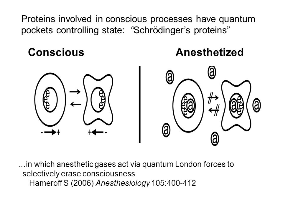 Conscious Anesthetized