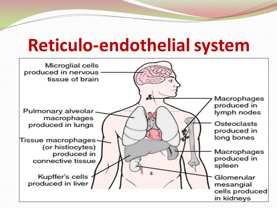 Reticulo-endothelial system