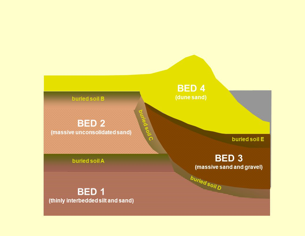 BED 4 BED 2 BED 3 BED 1 (dune sand) buried soil B buried soil C