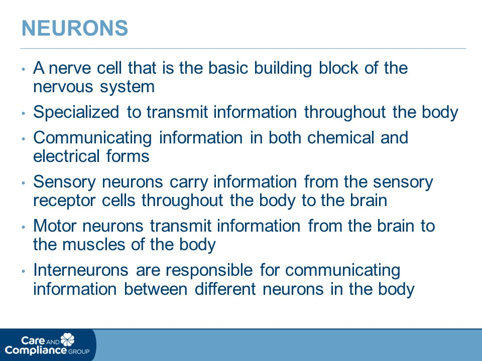 Neurons A nerve cell that is the basic building block of the nervous system. Specialized to transmit information throughout the body.