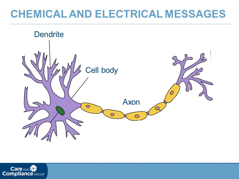 Chemical and Electrical Messages