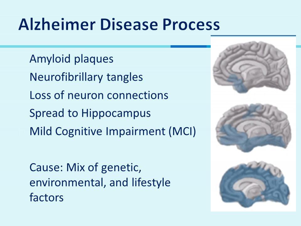 Alzheimer Disease Process