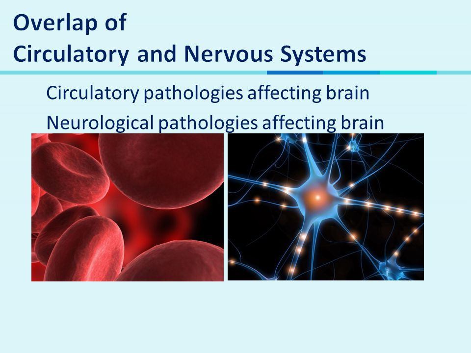 Overlap of Circulatory and Nervous Systems