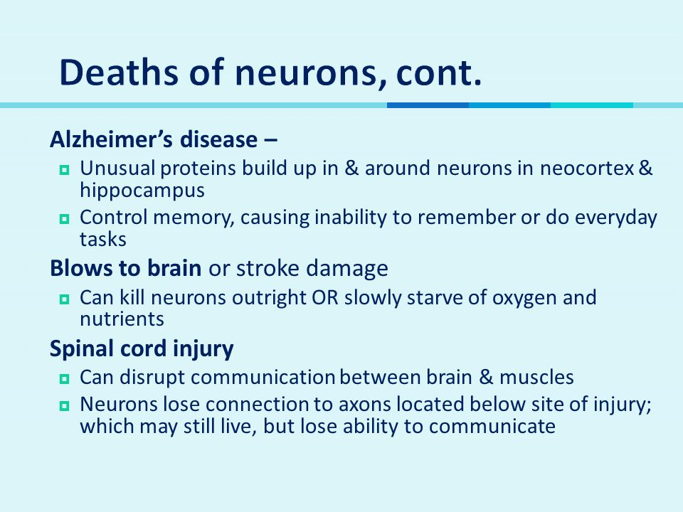 Deaths of neurons, cont. Alzheimer's disease –