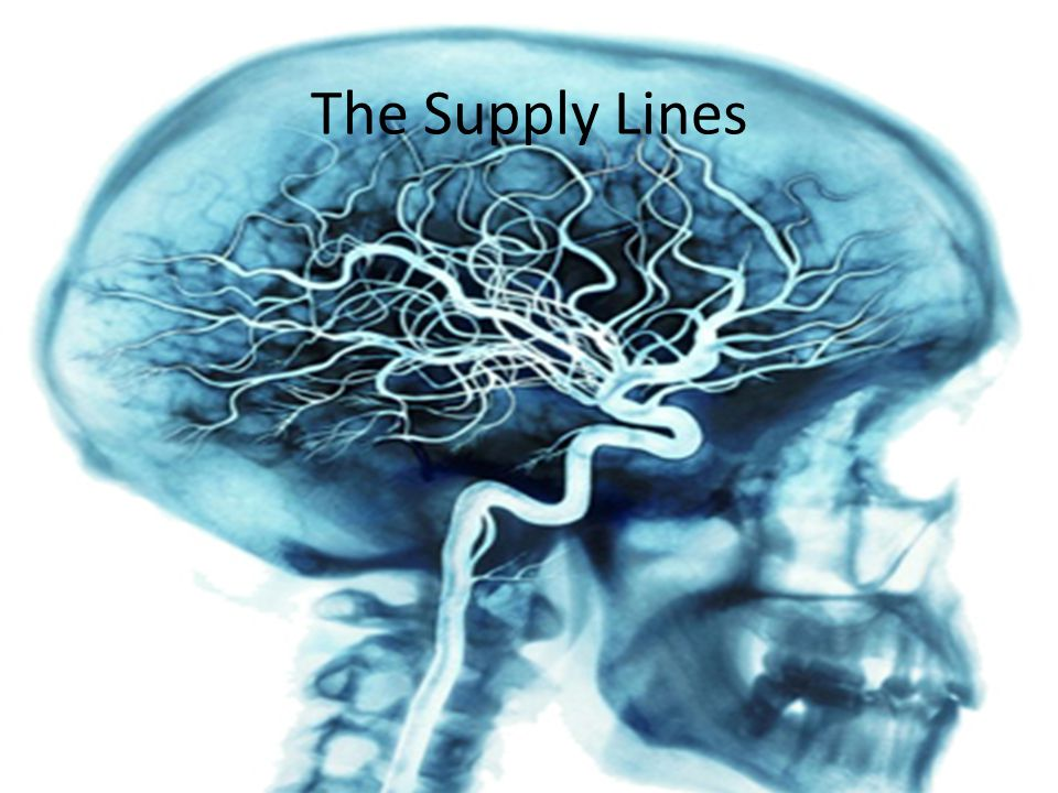 The Supply Lines Rich network of blood vessels nourishes the Brain.