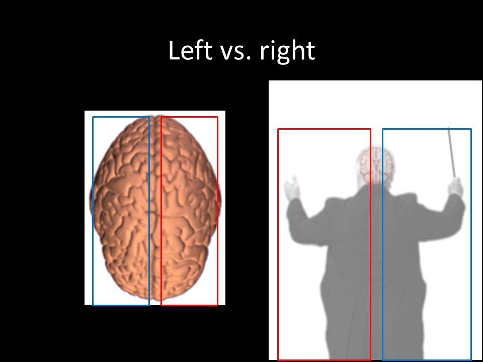 Left vs. right Your brain is divided into right and left halves.