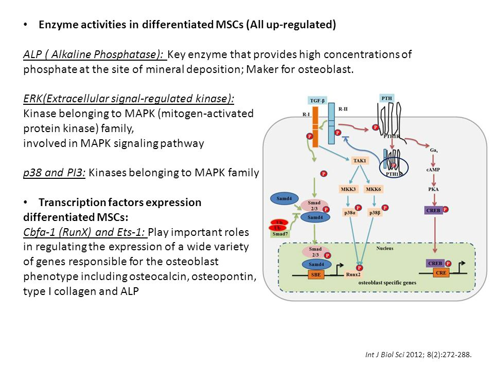 Enzyme activities in differentiated MSCs (All up-regulated)