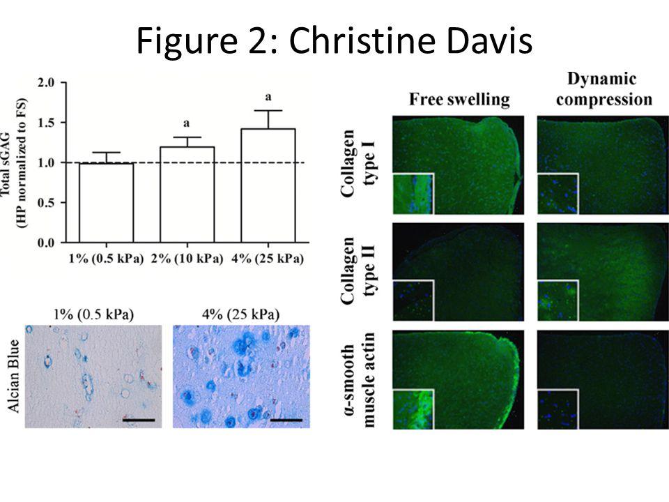 Figure 2: Christine Davis