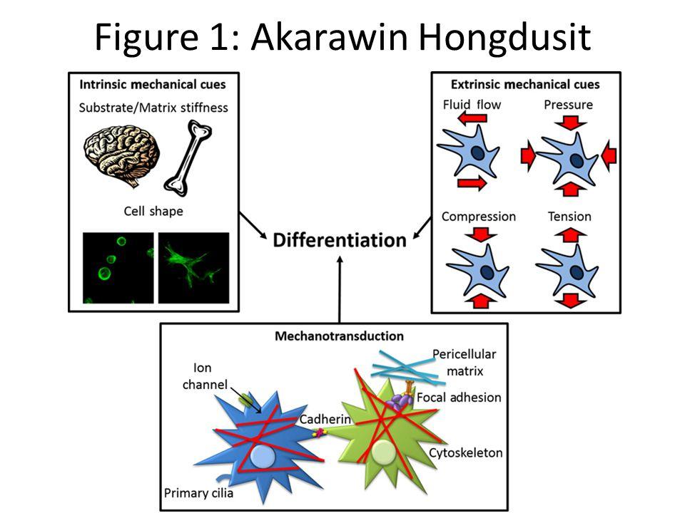 Figure 1: Akarawin Hongdusit